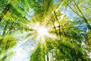 Nonprofitrecht Umwelt