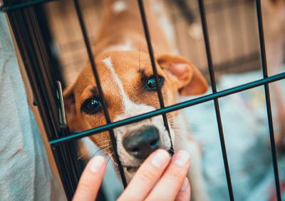 Vermittlung von Tieren aus dem Ausland – Welcher Steuersatz ist anzuwenden?